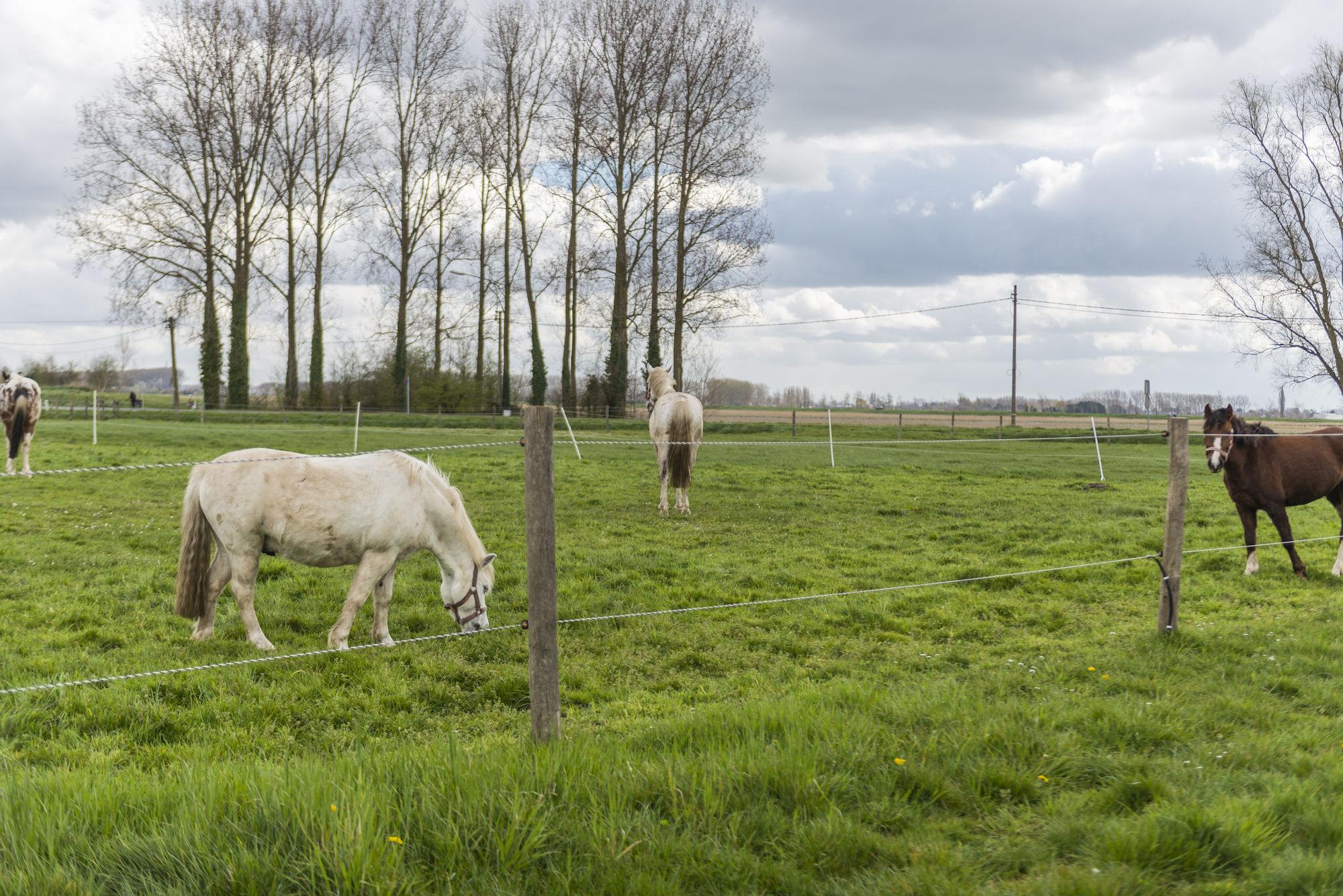 160407-boerekreek-paardrijden-30.jpg