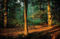 ochtendlicht in het bos.jpg
