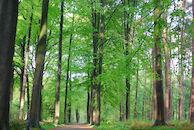 lente in het bos.JPG