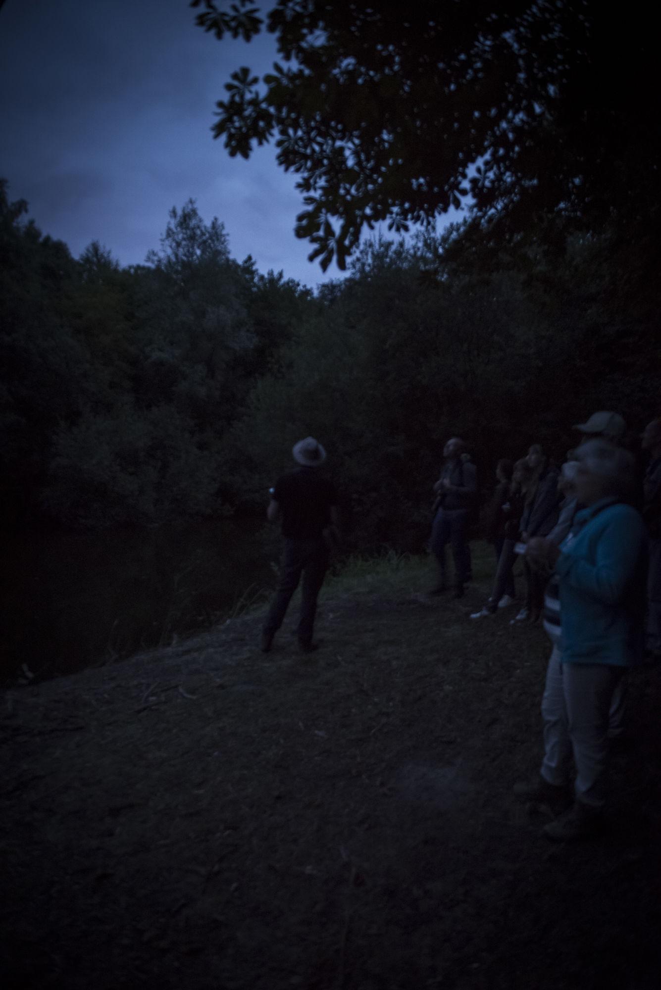 20180818 Het Leen Nacht van de vleermuis 00019.jpg