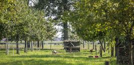 170826-Huysmanhoeve-OVL-zomert-112.jpg
