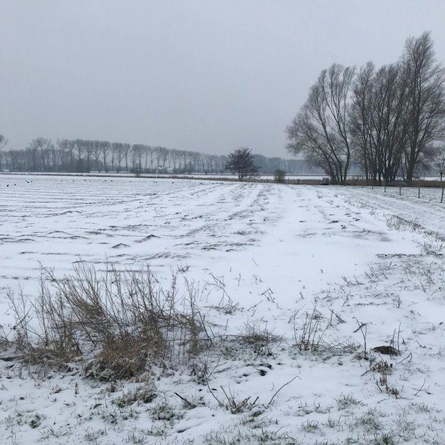 20190122 De Boerekreek in de sneeuw