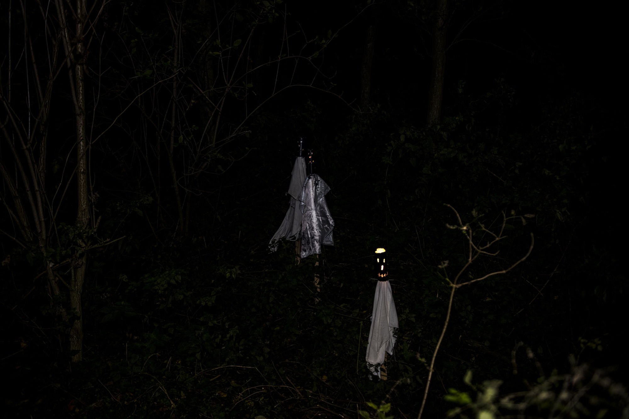 171029-Puyenbroeck-halloween-00267.jpg