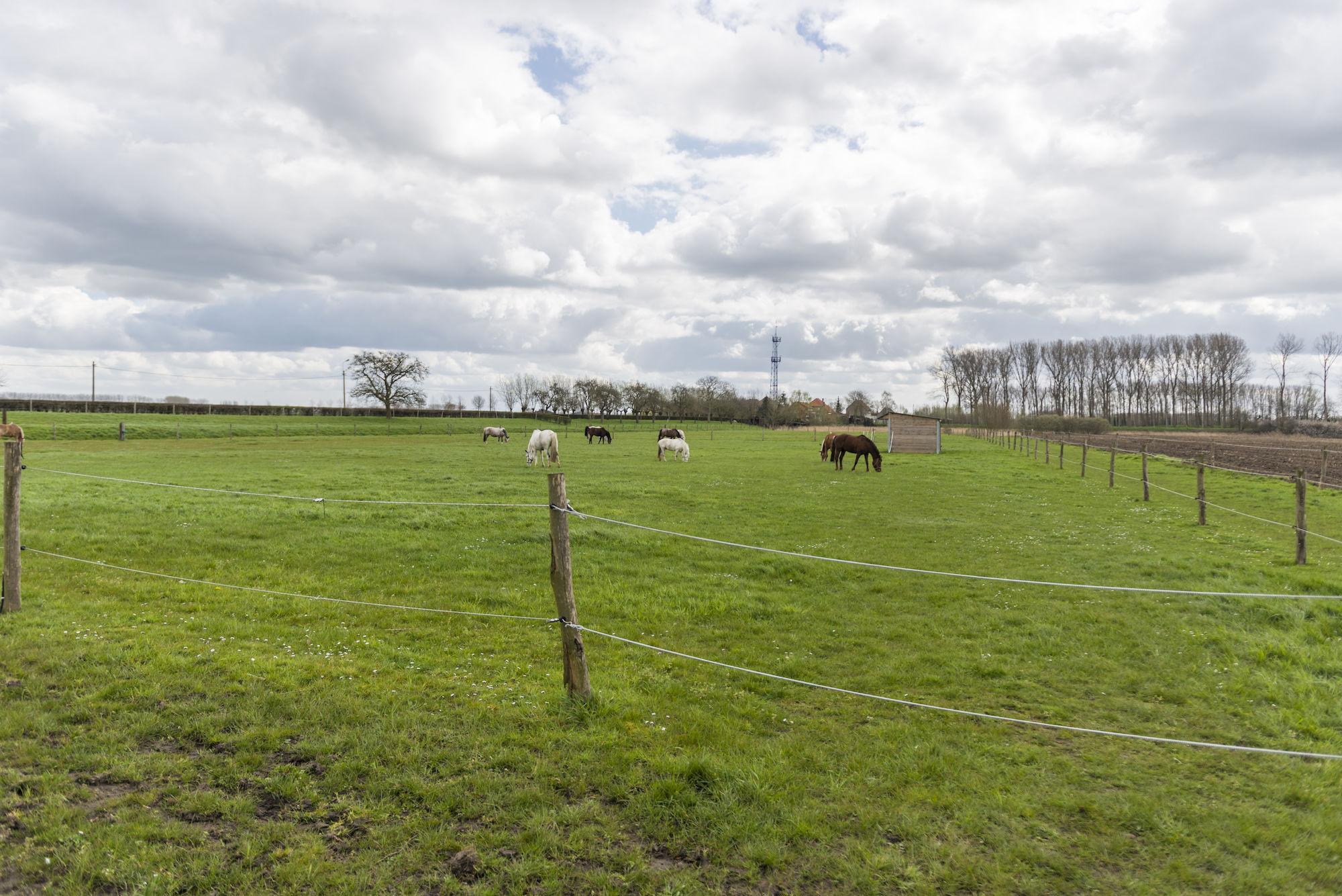 160407-boerekreek-paardrijden-32.jpg