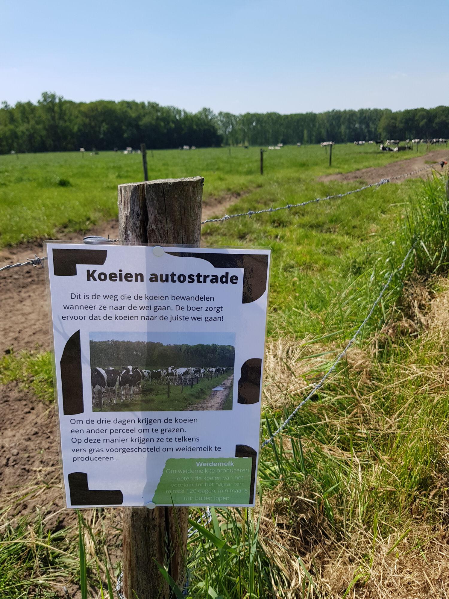 20210613_Verraspapa beestiggeestig_HoeveHooghof_Maldegem (10).jpg