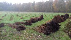 Aanplanting bomen.jpg