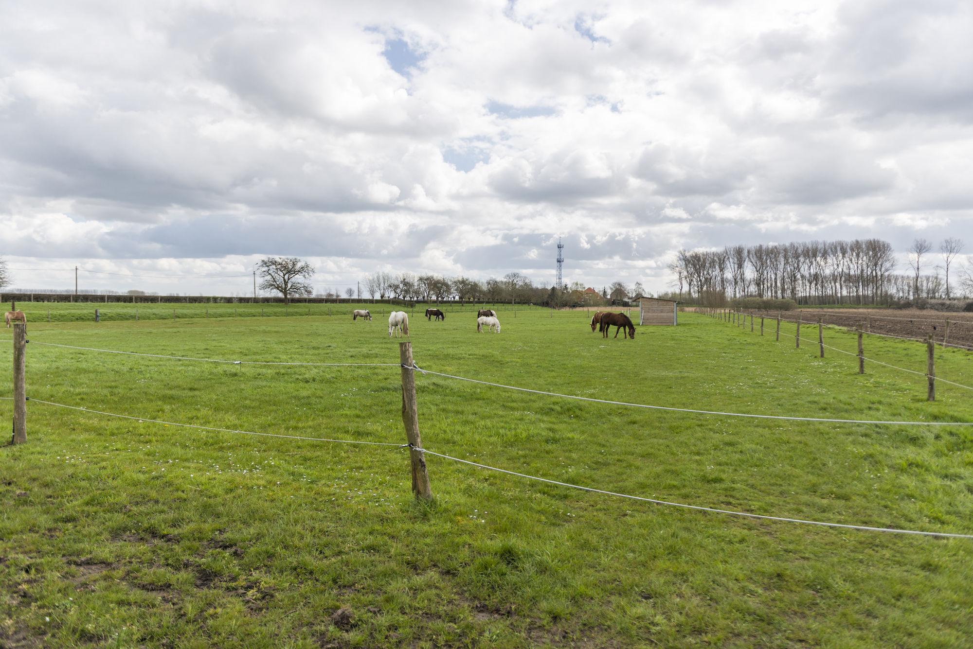160407-boerekreek-paardrijden-31.jpg