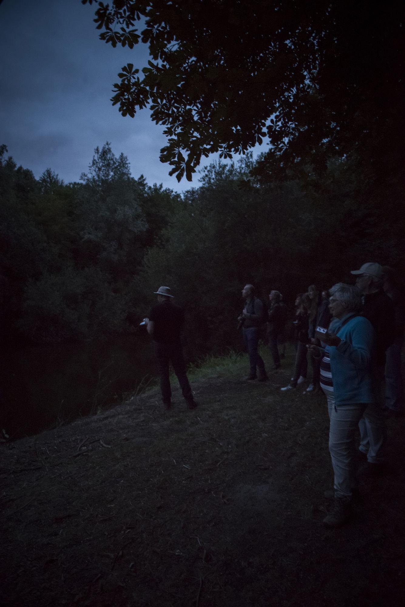 20180818 Het Leen Nacht van de vleermuis 00018.jpg