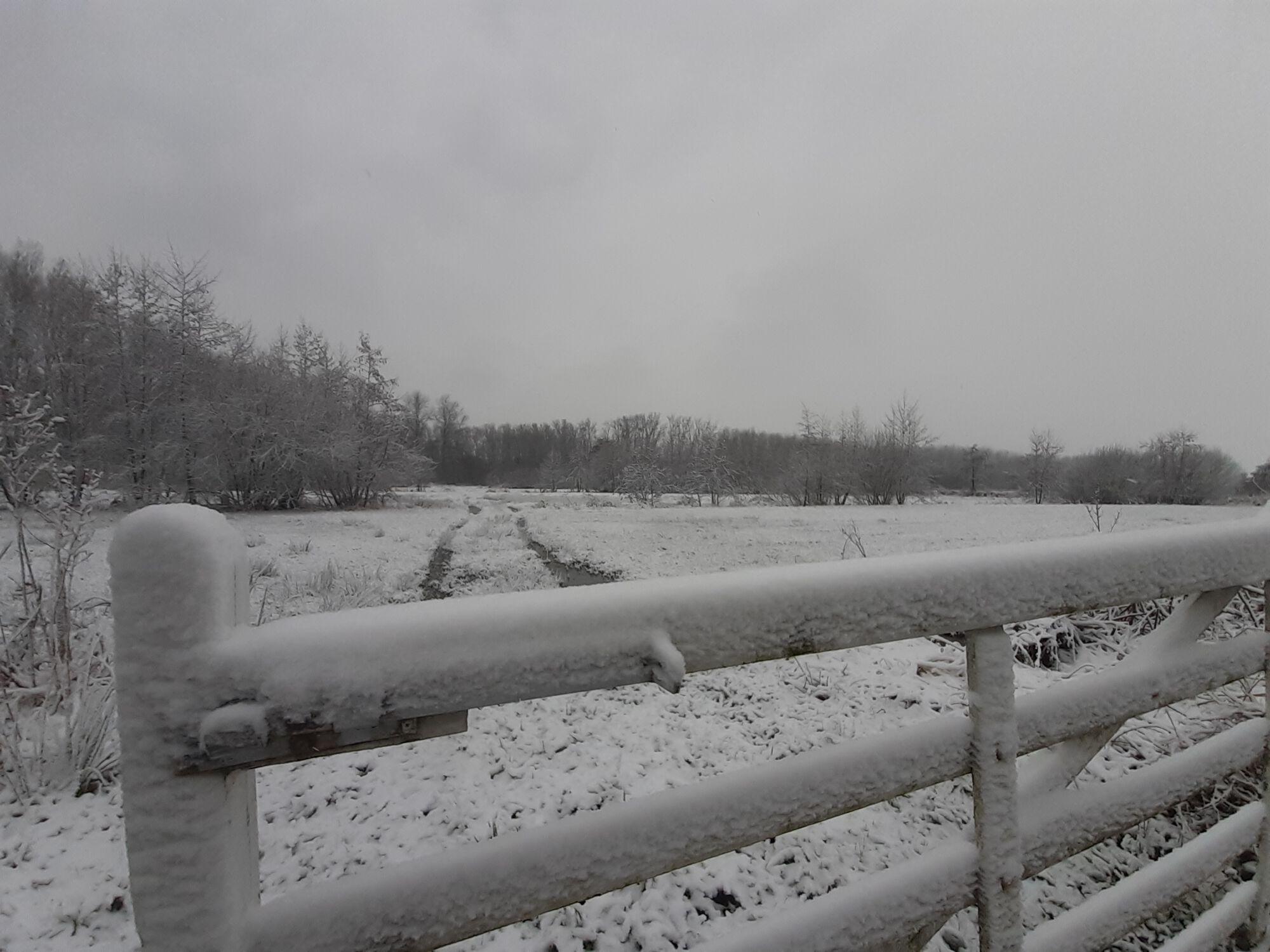 20210207 Winterbeeld Nieuwdonk