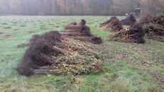 aanplanting bomen (2).jpg