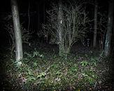 171029-Puyenbroeck-halloween-00255.jpg