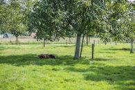 170826-Huysmanhoeve-OVL-zomert-84.jpg