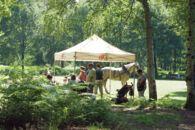 20180701 Speel erop bos Het Leen (31).jpg