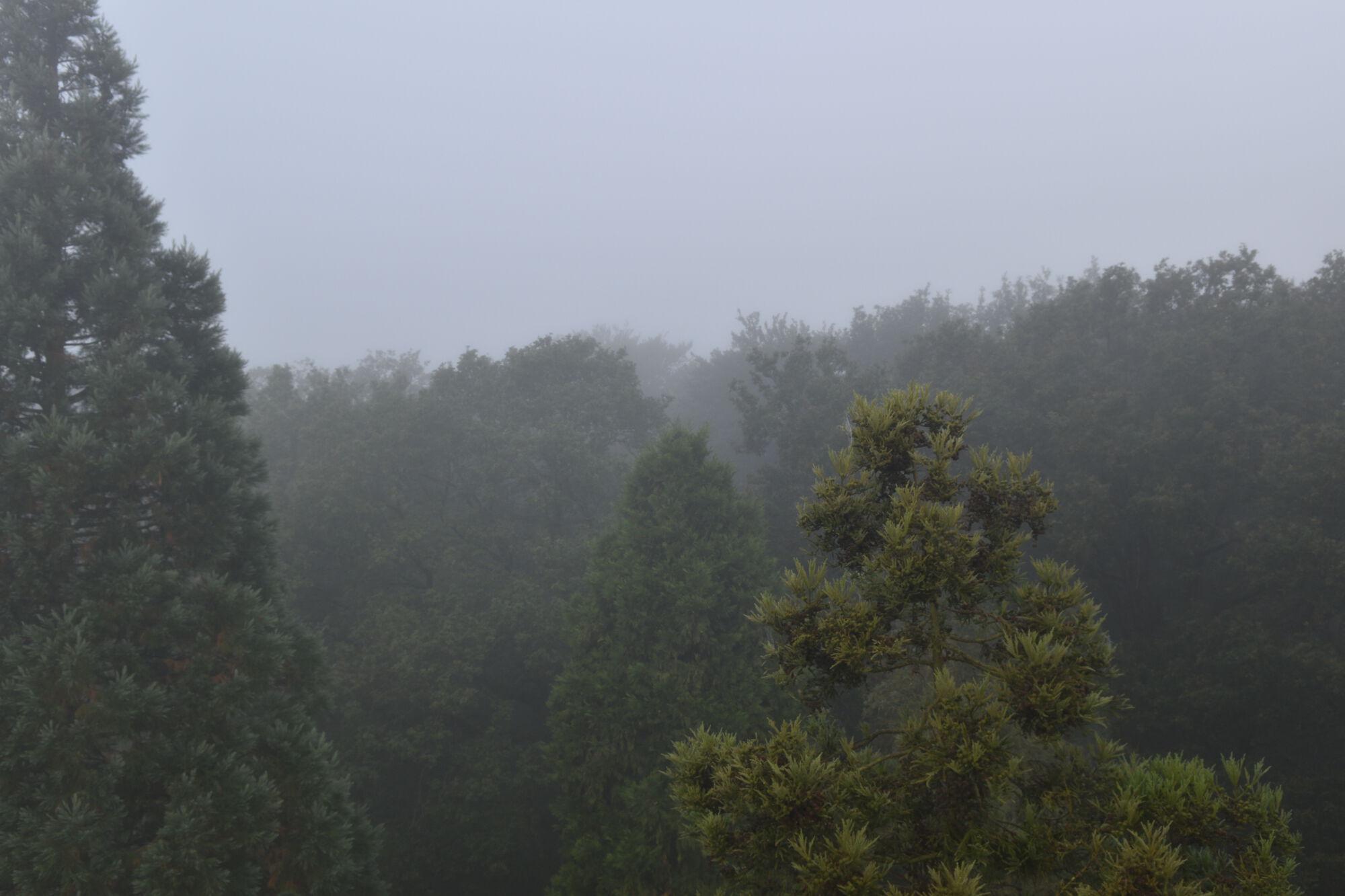 Het Leen in de mist