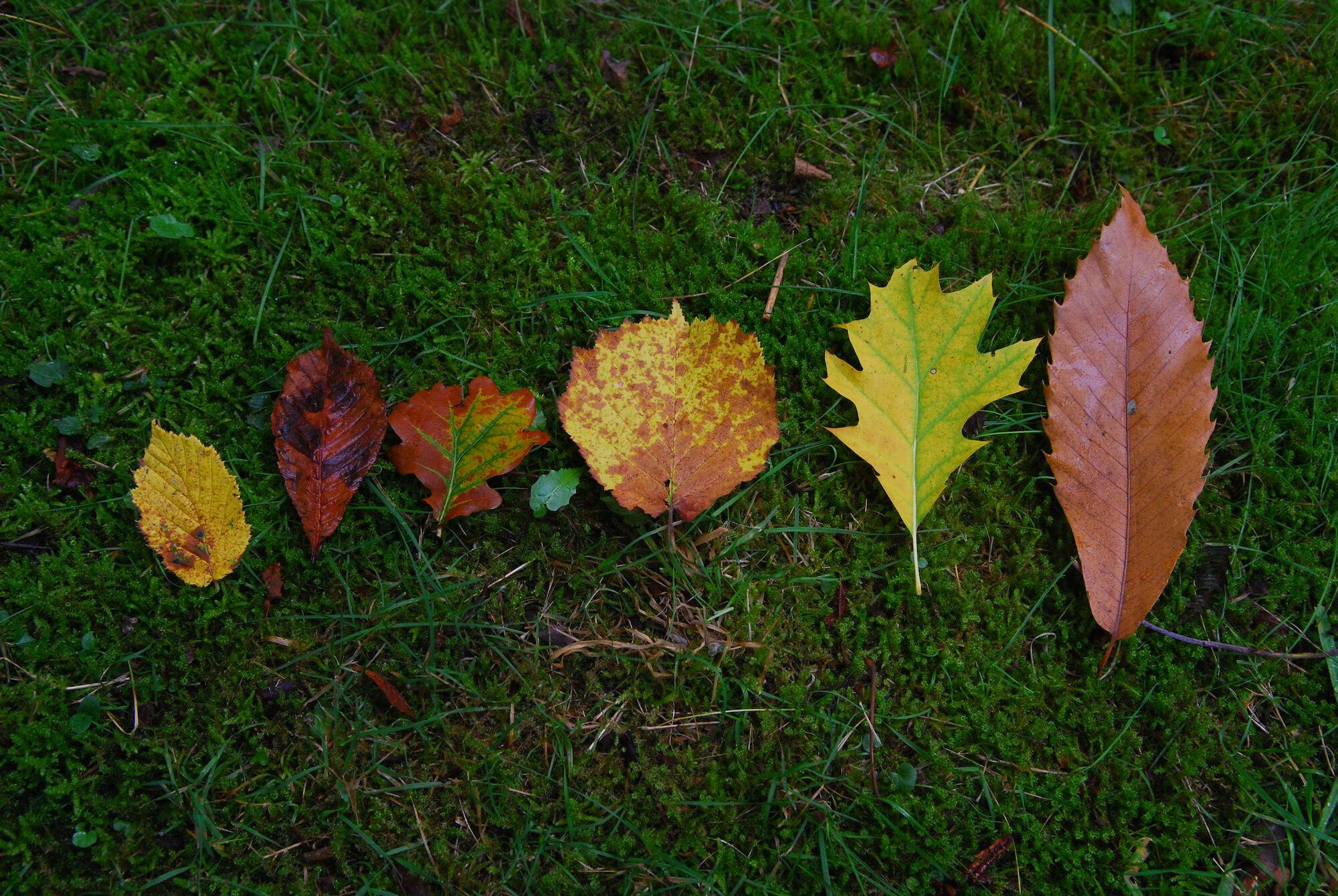 bladeren