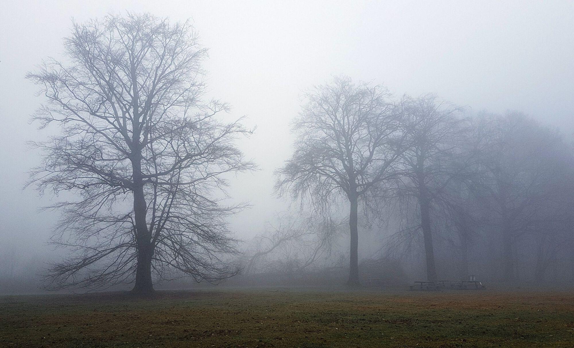 Mist in Het Leen.jpg