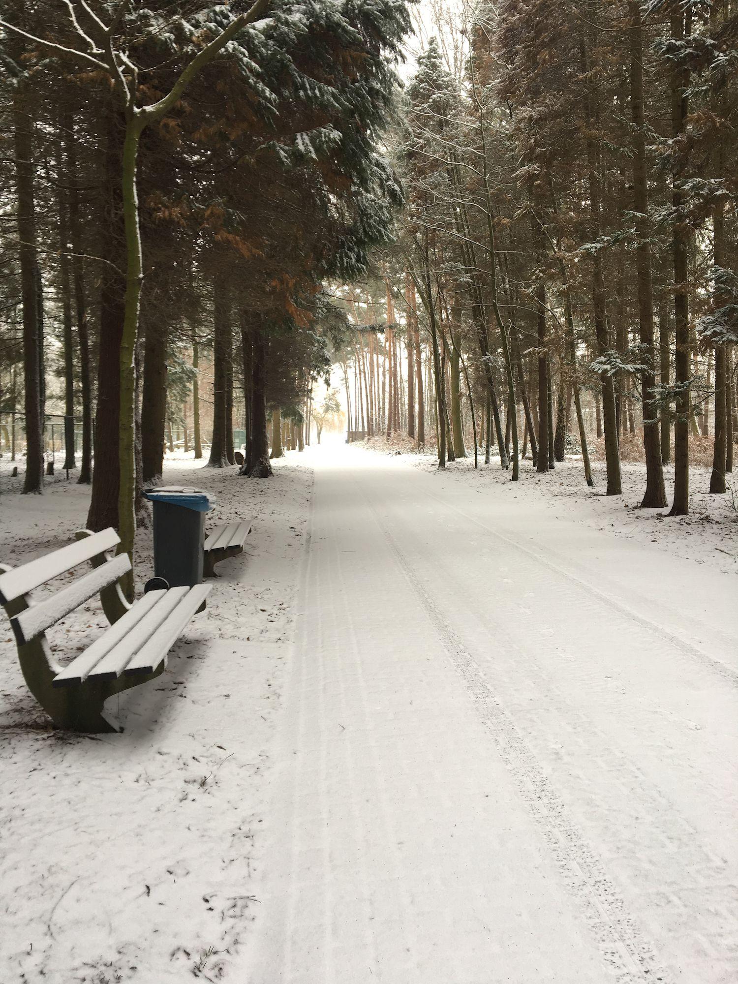20190122 De Ster in de sneeuw